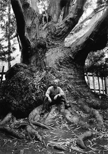 Ansel Adams / Portrait of Edward Weston, 1945