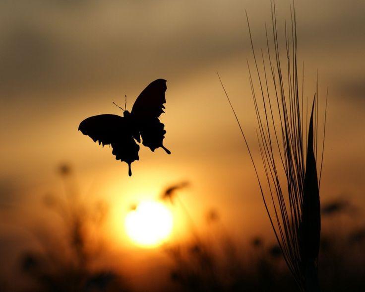 Mariposa en el atardecer