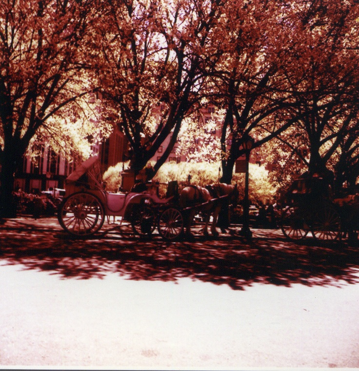 Central Park, NYC 2005