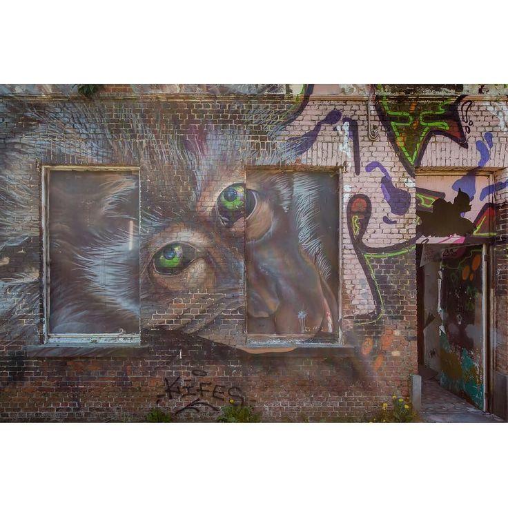 Monkey  #doel #antwerpen #belgium #belgie #wonderful_holland #superhubs #dutch_connextion #ig_nederland #wanderlust #igersholland #holland_photolovers #picture_to_keep #ig_discover_holland #graffiti #graffitiart #graffitiigers