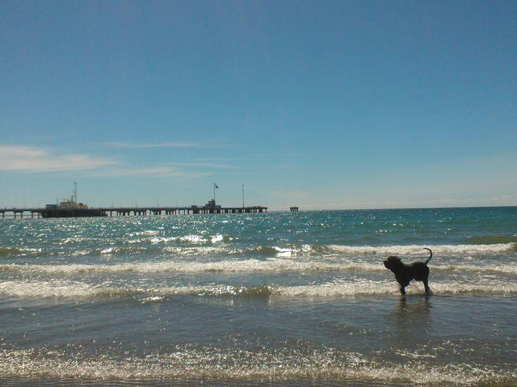 Océano Atlántico, Puerto Madryn. Argentina.