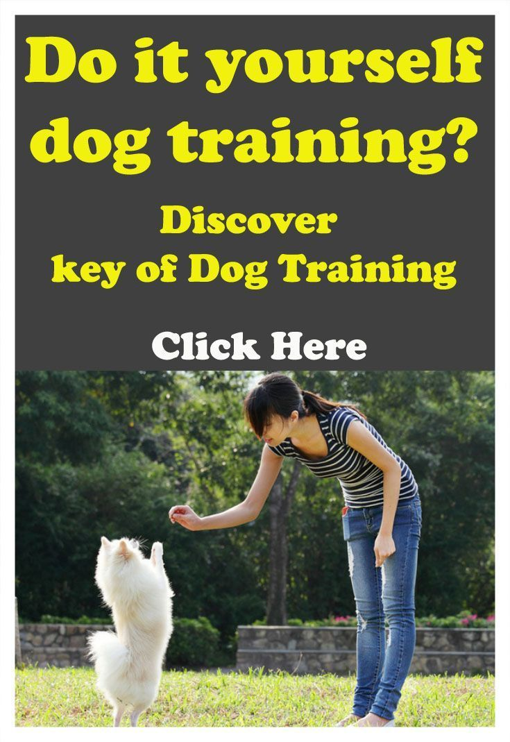 Do it yourself of dog training? Discover the real key of Dog Training Tips #DogsTraining