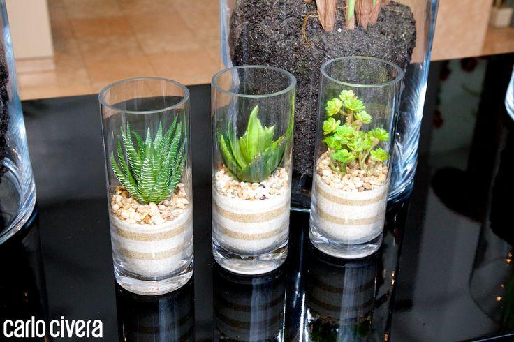 Composizioni di piante grasse in vetro. www.carlocivera.org #composizioni #piantegrasse #vetro