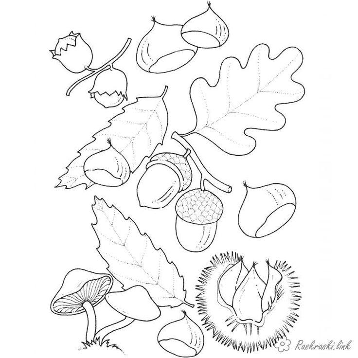 раскраска детская, грибы, жёлуди, листья | Раскраски ...