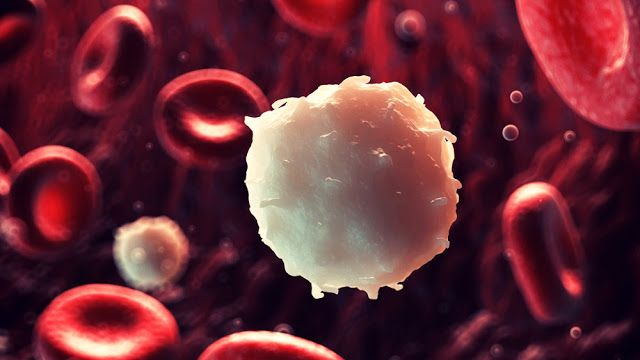 New acute myeloid leukemia treatment drugs is the focus of new clinical trials, applied to patients at three sites across the United States.