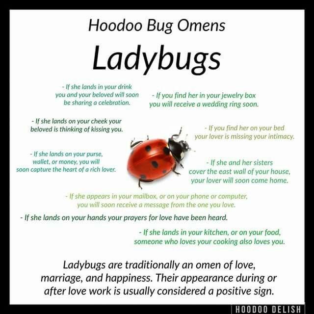 Hoodoo bug omens lady bugs | Spiritual     | magic words | Voodoo