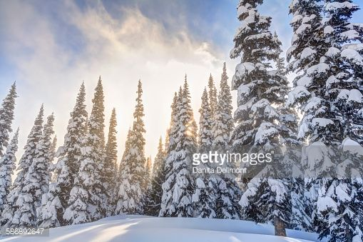 mountain skiing forest winter - Google Search