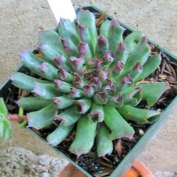 Zone Garden Design Succulents on garden designs zone 6, garden designs zone 3, garden designs zone 7,
