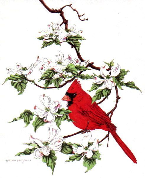 virginia cardinal dogwood butterfly tattoo - Google Search