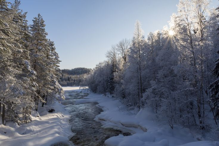 Little stream in the forest with sun shine through a birch on right side , picture from the Northern Sweden.