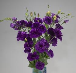 Dark Purple Lisianthus