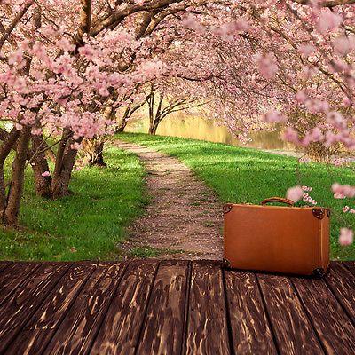 Rosa Flor De Cerezo Árboles Forestales Naturaleza Floral Foto Wallpaper mural