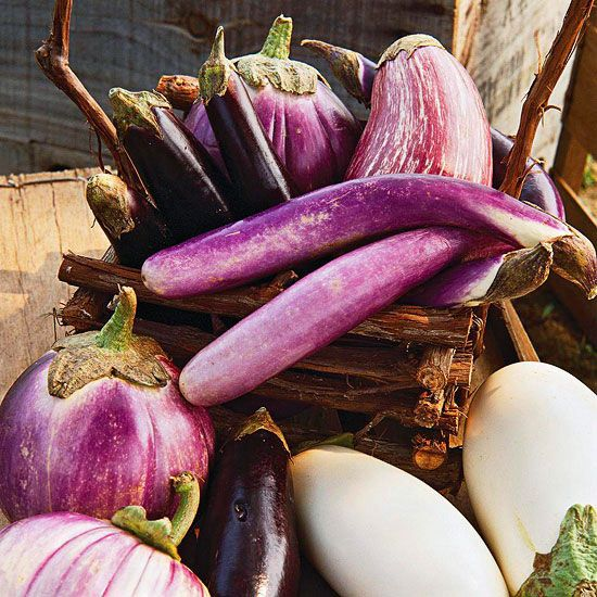 Eggplants appeal to the eyes, even if they don't do much for your taste buds. The common types feature purple fruits—from black to the palest lavender. But look around and you can find varieties with green, orange, or red fruits, too. Watch for 'Fairy Tale', an award-winning selection with purple fruits striped white or pink 'Rosa Bianca'. By the way: Don't overlook eggplant's beautiful purple flowers, too!