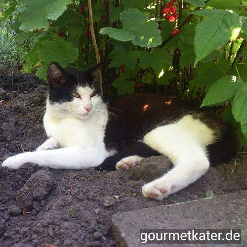 Katze #cat