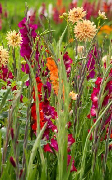 Auch Gladiolen harmonieren wunderbar mit Dahlien. Birgit S. bringt zudem noch Flieder und Rhododendron in die Dahlien-Gladiolen-Kombination mit ein