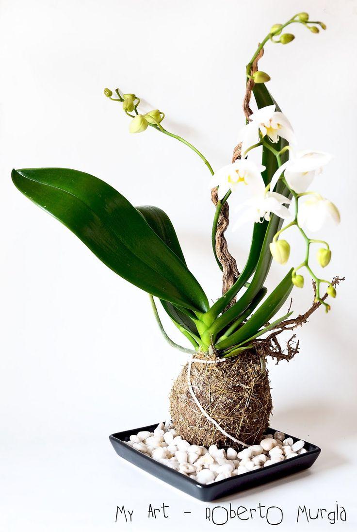 Orchid kokedama: Kokedama Ball, Kokedama Lov, Orchids Kokedama, Moss Ball, Kokedama Orchids, Orchids Orquidea, Kokedama Gardens, Kokedama Contest Cooking Jpg, Orchids 3
