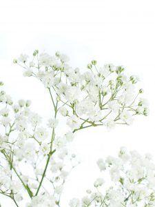 Blumen Online Bestellen Schnittblumen Katalog Blumigo Hochzeit