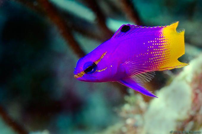 24 Best Fish Images On Pinterest