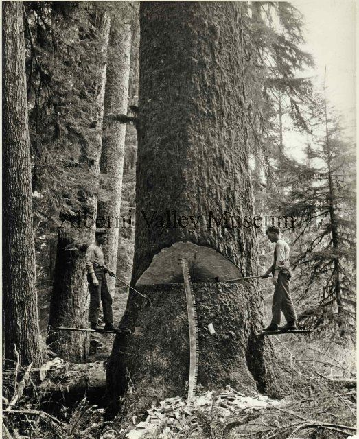 PN19012  Loggers with axes stand on springboards, c1910.  [Alberni Valley Museum Photograph Collection]