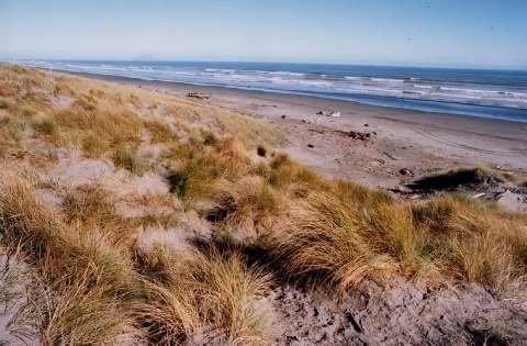 The beach were I grew up on :) #love #waitarere
