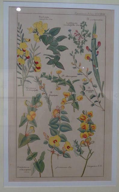 A Monza la mostra 'Carte fiorite'