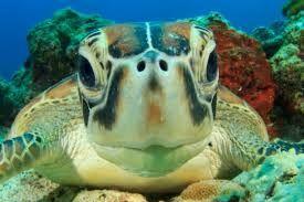 Afbeeldingsresultaat voor schildpad taart