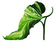 scarpe strane - Cerca con Google