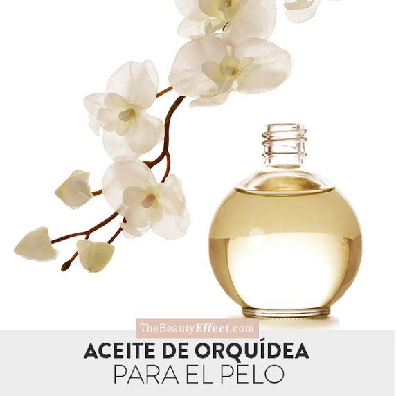 Las orquideas además de ser divinas les darán un pelo increíble. >>> http://bit.ly/2qEmEDP