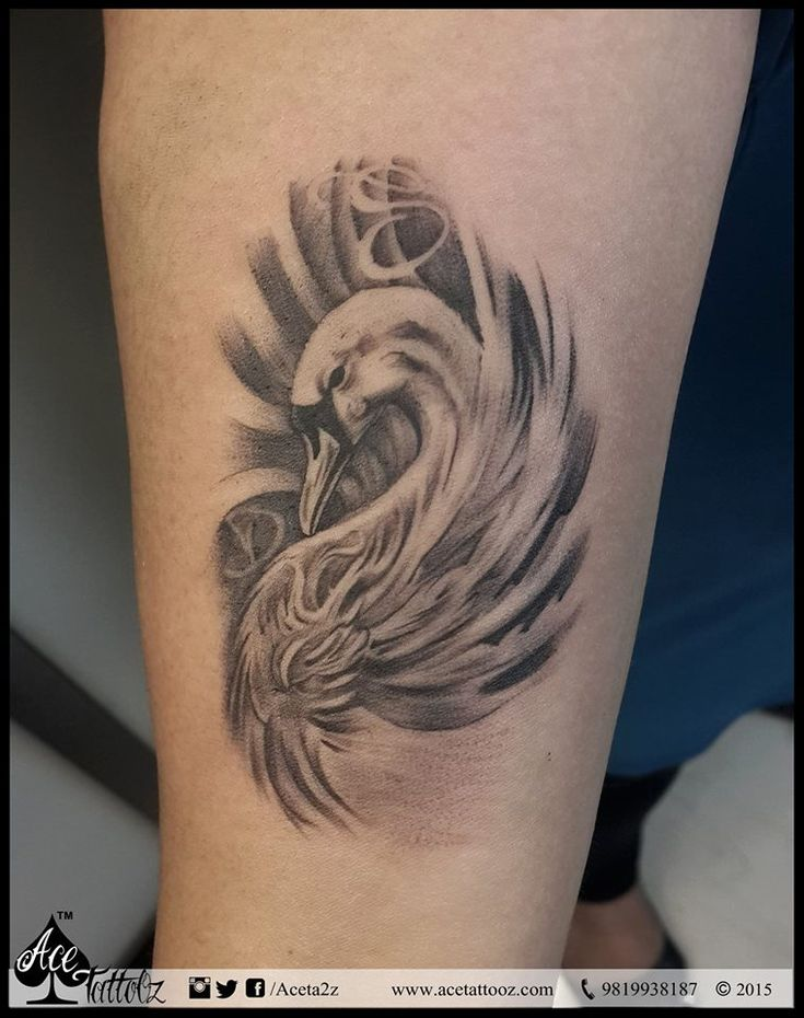 17 best ideas about swan tattoo on pinterest black swan for Black swan tattoo