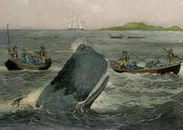 History: The image above is locals whaling. The treaty they had signed was vital to their relationship. It let Maori have authority over their tribal areas. Early meetings were friendly and respectful. In early times, the most contact they had with each other was through whaling. At the whaling docks, trading occurred. Maori and Pakeha shared ships. 2 decades later Pakeha relied on Maori economically. They gave most of their food for the towns while keeping control over their own…