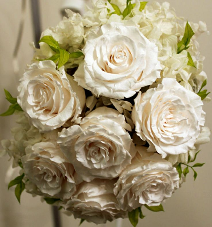 10 best White preserved flowers images on Pinterest   Preserved ...
