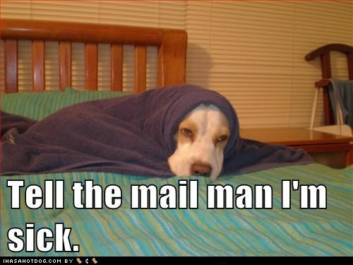 7702d834e4a56fb3fda3547d6a73f615 going postal post office 135 best doggie talk images on pinterest funny dogs, funny stuff