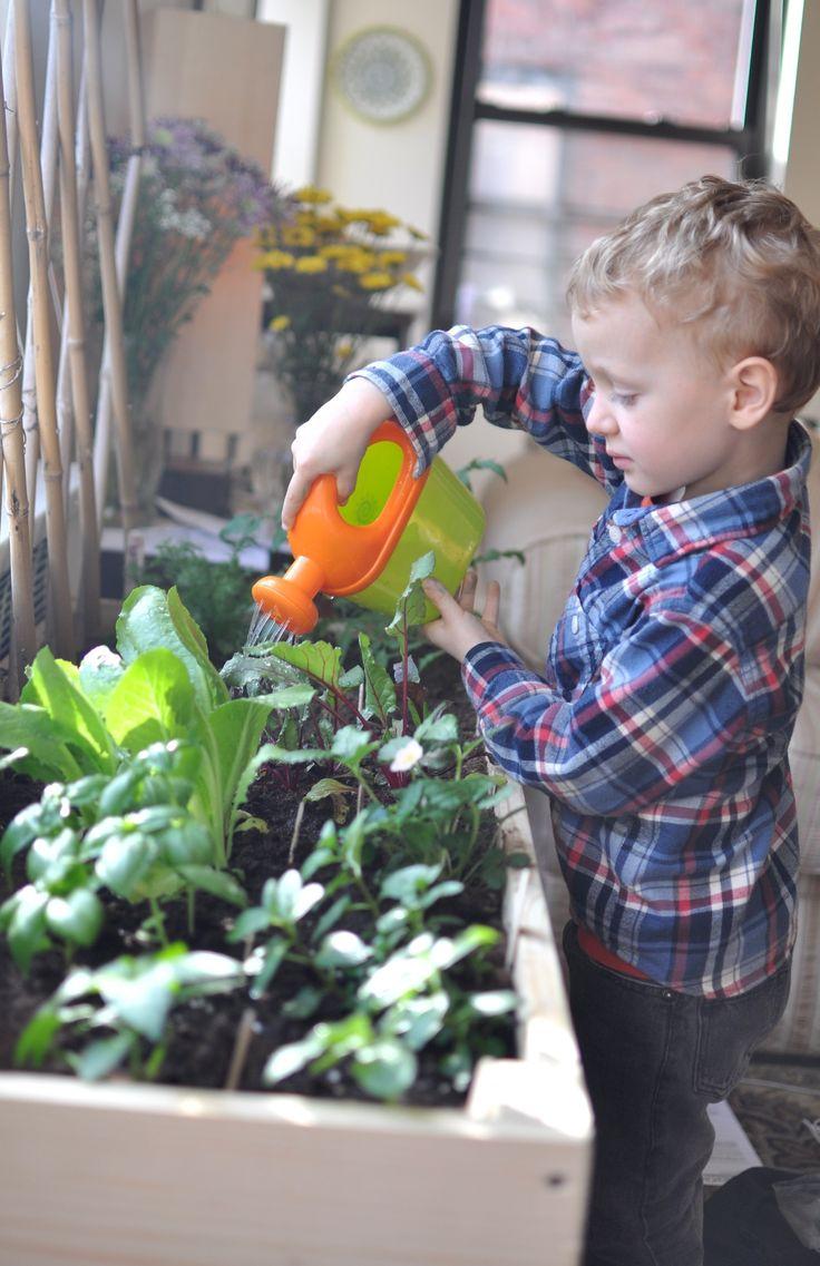 Indoor Vegetable Garden Ideas garden ideas garden design outdoor japanese gardens indoor garden How To Properly Grow An Organic Garden Happy House And Garden Social Site