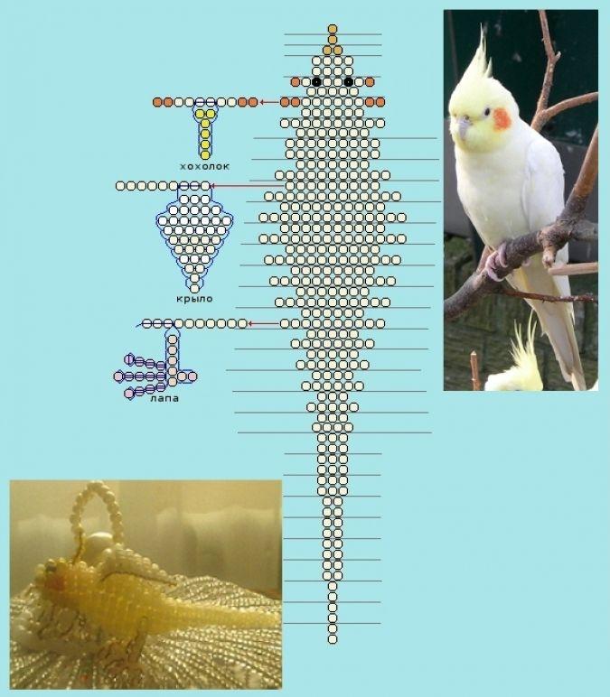 Схема плетения из бисера - нимфовый попугай