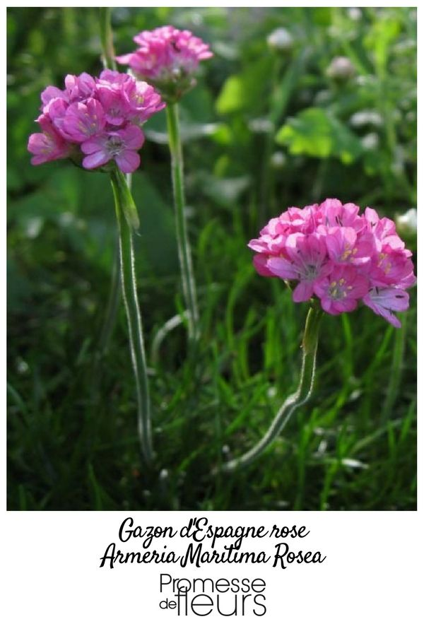 202 best jardin rose images on pinterest | flowers, plants and