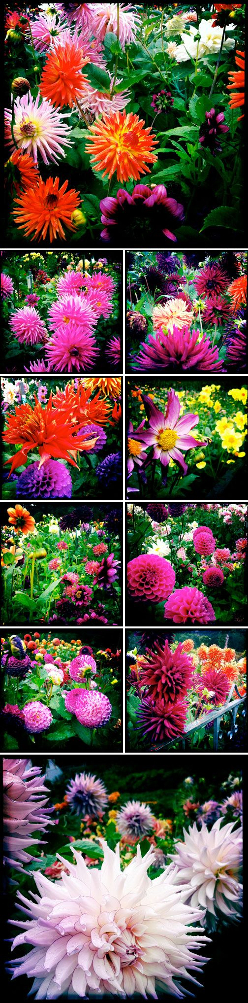 best flowers images on pinterest flowers garden cut flowers