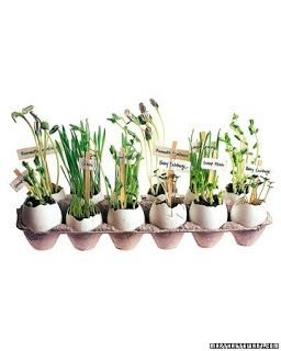 Use eggshells as pots ~ grow seeds in them. Once large enough, plant shell and all in the ground.
