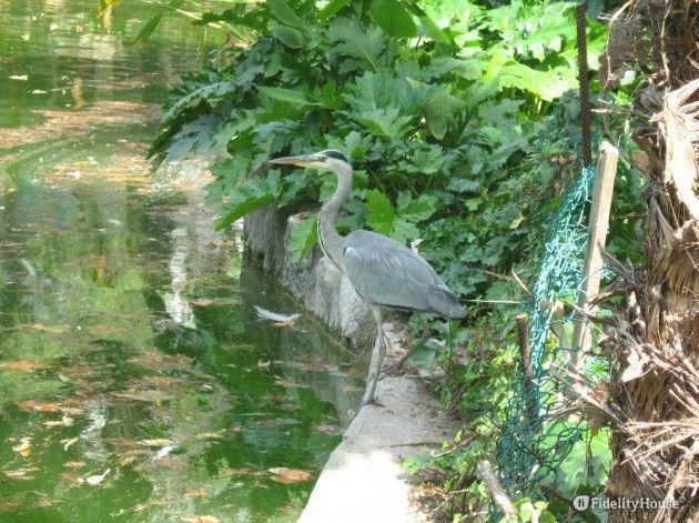 Aironi in un laghetto del parco del Palazzo di Cristallo a Porto - Fidelity Foto