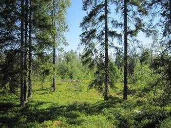 Ylitornio, Lapland