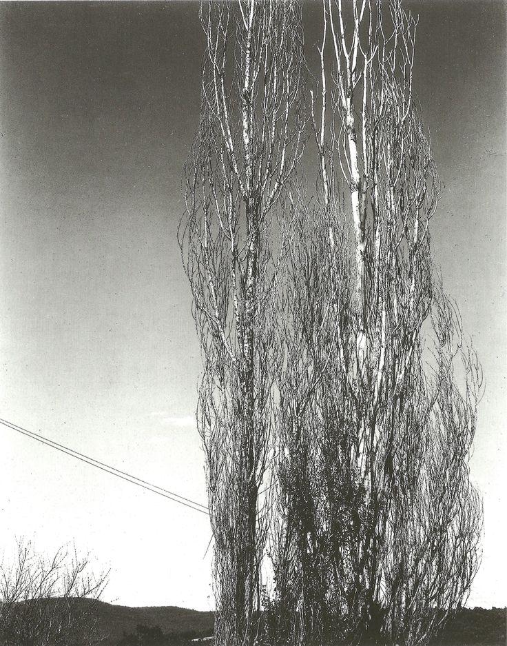 Poplars (1934)