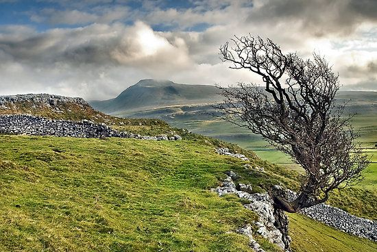 Yorkshire Dales, Ingleborough in the distance. Home.