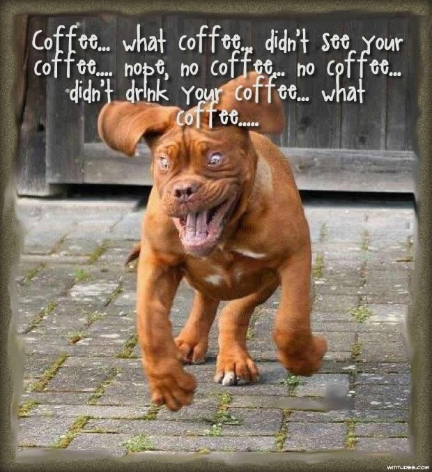Coffee Did I See Your Coffee Funny Dogs Funny Animal Quotes Funny Dog Photos