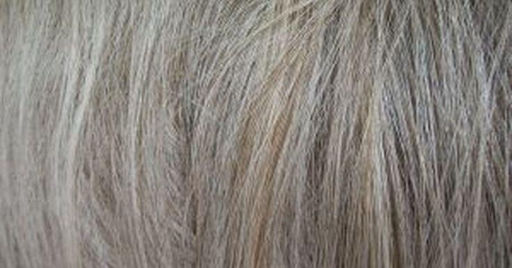 Dejar crecer las canas. Cuando el pelo comienza a volverse gris, la mayoría de la gente empieza a colorearlo para cubrir las canas y la inconsistencia. Hay sólo dos elecciones que hacer cuando se ven las canas: retocarlas o dejarte crecer el pelo.