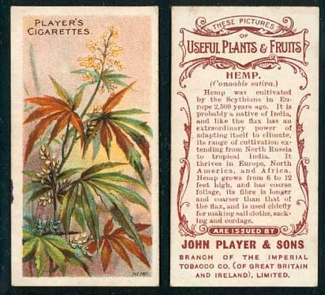 8 Best Trading Cards images | Cannabis news, Weed strains ...