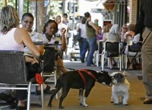 Dog Friendly Dining Newport Beach Ca