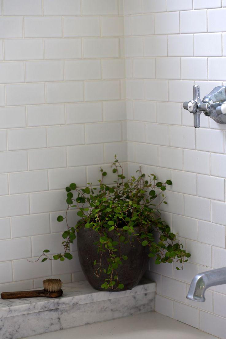 best 20 low light houseplants ideas on pinterest indoor house plants low light plants and. Black Bedroom Furniture Sets. Home Design Ideas