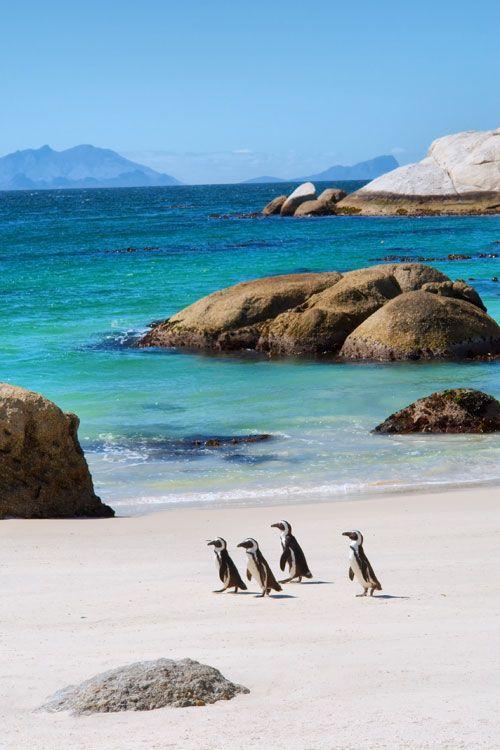 Imagini pentru plaja boulders africa de sud