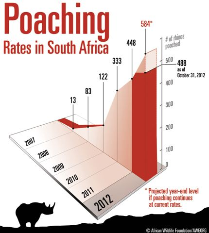 #Rhino poaching infographic