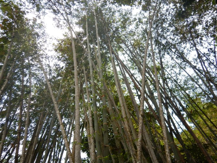 L1M1AP3: 1/250sec, F/2.8, 4.3mm, ISO 125 Pentax Auto. The bamboo gave a great way to show lines in a vertical landscape.