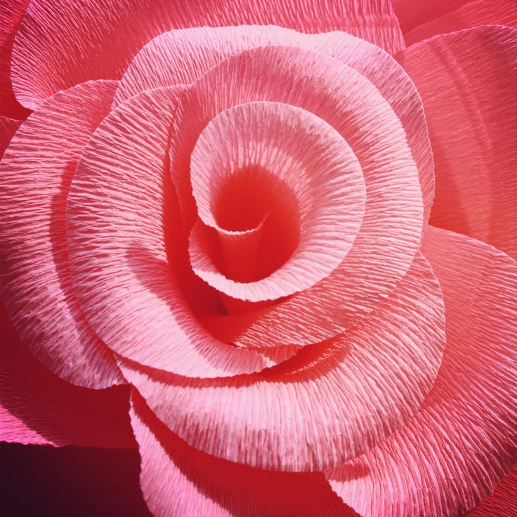 Giant pink crepe paper rose from our lookbook shoot